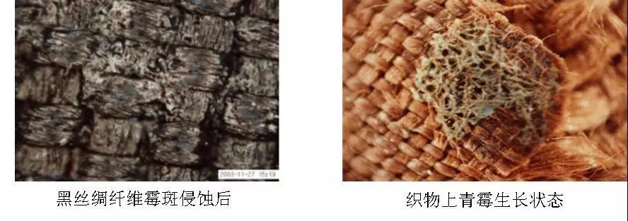 光学数码显微镜在文物保护中的应用