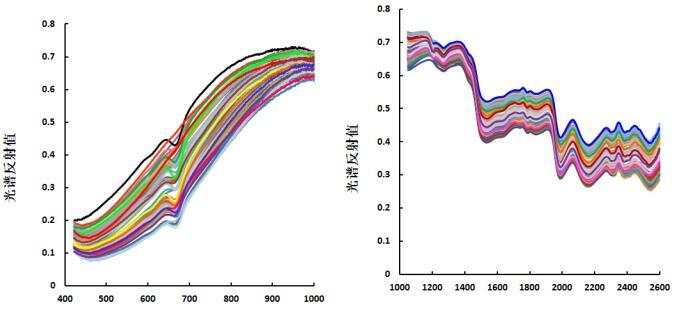基于可见_近红外高光谱图像的药品快速鉴别研究