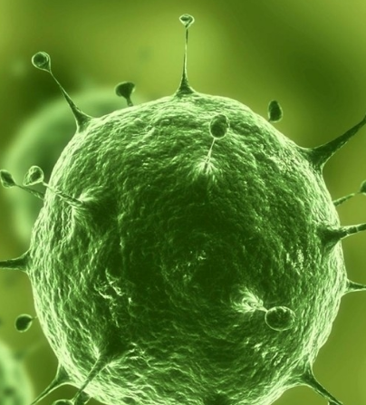 蔬菜细胞结构图