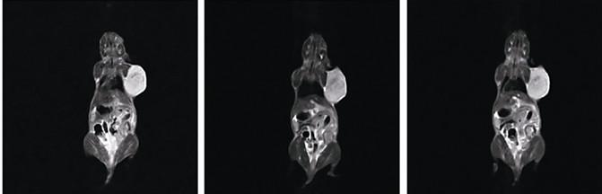 大鼠核磁共振成像仪