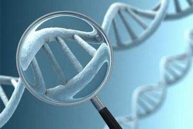 细胞凋亡检测方法
