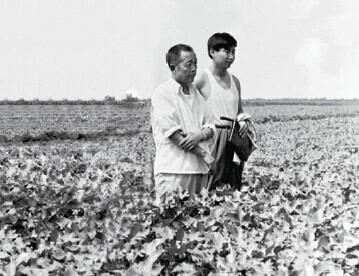 p27(2) 1983 年8 月9 日,时任**正定县委书记习近平轻车简从到田间地头查看棉花生产情况。